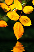 Harmony Metal Prints - Leafs over water Metal Print by Carlos Caetano