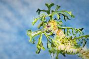 Sea Life Art Prints - Leafy Sea Dragon Print by Tanya L Haynes - Printscapes