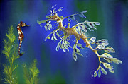 Seahorse Metal Prints - Leafy Sea Dragon Metal Print by Thanh Thuy Nguyen