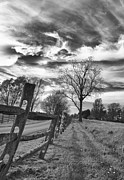 Split Rail Fence Prints - Leaner Print by Guy Whiteley
