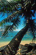 Kauai Prints Prints - Leaning Palm on Anini Beach Print by Kathy Yates