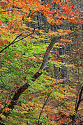 Michigan Fall Colors Posters - Leaning Poster by Scott Hovind