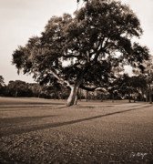 Live Oak Digital Art - Leaning Tree by Phill  Doherty