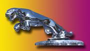 Leaping Jaguar Mascot Print by Jack Pumphrey