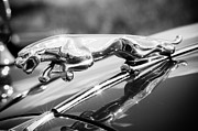 Leaping Jaguar Print by Sebastian Musial