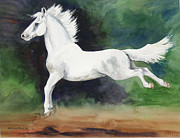 Dressage Horse Originals - Leaping Lipizzan by Kristine Plum