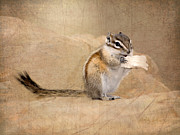 Sitting  Digital Art Posters - Least Chipmunk Poster by Betty LaRue