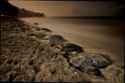 Riviere Metal Prints - Leatherback Turtles Nesting On Grande Metal Print by Brian J. Skerry