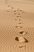 Sand Dunes Metal Prints - Leave only Footprints Metal Print by Heather Applegate