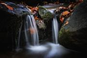 Leaves Along Small Stream 1 Print by Steve Hurt