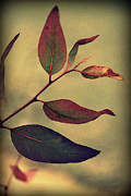 Green Burgandy Posters - Leaves Poster by Amy Neal