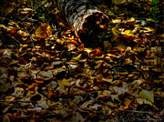 Prescott Prints - Leaves and Downed Tree Print by Aaron Burrows