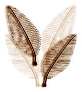 Leaves Print by Frank Tschakert