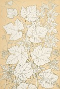 Print Painting Posters - Leaves from Nature Poster by Christopher Dresser