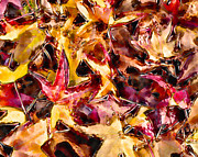 Marilyn Sholin Posters - Leaves of Glass Poster by Marilyn Sholin