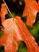 Leaves Of Orange Print by Beth Akerman