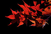 Leaves Of Red Print by Heather Applegate