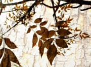 Fall Leaves Posters - Leaves on bark Poster by Cathie Tyler