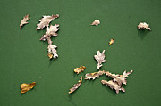 Asphalt Photos - Leaves on Green Background by Paul Edmondson
