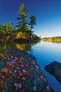 Killarney Provincial Park Photos - Leaves On Rock, Killarney Provincial by Mike Grandmailson
