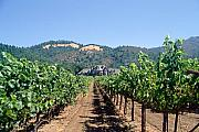 Vineyard Landscape Prints - Ledson Winery and Vineyard Sonoma County California Print by George Oze