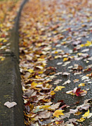 Autumn Leaves Photos - Left Behind by Rebecca Cozart