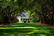 Oak Trees Posters - Legare Waring House Charleston SC Poster by Susanne Van Hulst