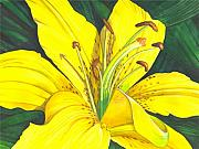 Floral Framed Prints - Lemon Lily Framed Print by Catherine G McElroy
