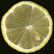 Phachesnie Studio - Lemon