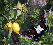 Blue Butterfly - Lemons For U2  by Eric Kempson