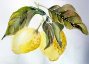 Watercolor Drawings Originals - Lemons by Mindy Newman