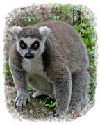 Lemur Photos - Lemur by Larry Linton
