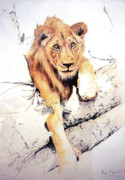 Canvas Cat Prints Prints - Leo Print by Roger Bonnick