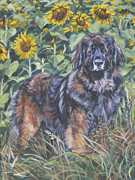 Pet Art Painting Framed Prints - Leonberger in sunflowers Framed Print by Lee Ann Shepard