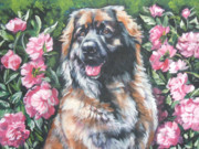 Shepard Posters - Leonberger in the Peonies Poster by Lee Ann Shepard