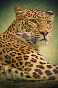 Mammals Mixed Media Prints - Leopard Print by Angela Doelling AD DESIGN Photo and PhotoArt