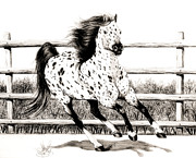 Horse Drawings Prints - Leopard Appaloosa loping Print by Cheryl Poland