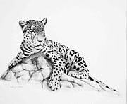 Leopards Paintings - Leopard Black and White by DiDi Higginbotham