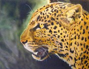 Wild Cats Originals - Leopard by Crispin  Delgado