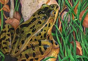 Dakota Paintings - Leopard Frog by Brandy Fenenga