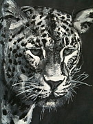 Hannah Chusid Prints - Leopard Print by Hannah Chusid