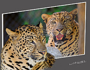 Oof Photos - Leopard OOF by Keith Lovejoy