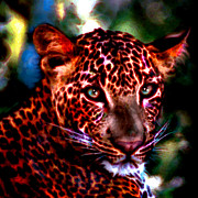 Leopards Paintings - Leopard Portrait by Elinor Mavor
