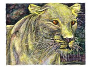 Golden Leopard Framed Prints - Leopard Stared Framed Print by Richard Stratford