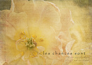 Textured Floral Framed Prints - Les Chances Sont  Framed Print by Reflective Moments  Photography and Digital Art Images