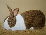 Rabbit Pastels - Less Rabbit by Lynn Quinn