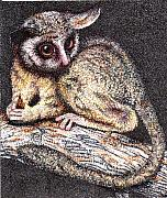Pointillism Art - Lesser Bush Baby by Scarlett Royal