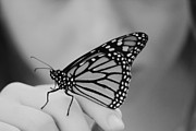 Butterfly Photos - Let It Go by Aimelle