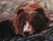 Kodiak Bears Paintings - Let Sleeping Bears Lie by Frank  Bingo