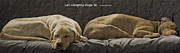 Two Dogs Framed Prints - Let sleeping dogs lie Framed Print by Gwyn Newcombe